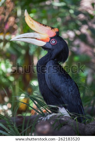 hornbills - stock photo