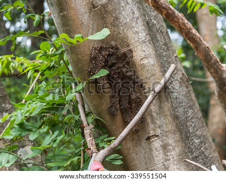 hornet hive on the tree