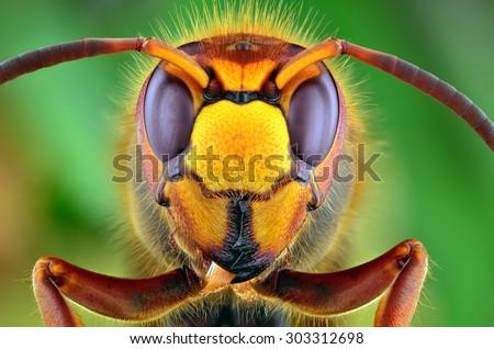 Hornet Macro Shot Nature - stock photo