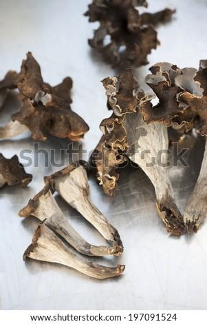 Horns of plenty on grey background, studio shot - stock photo