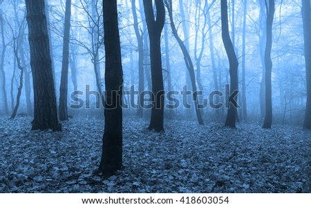 Horror scene in the forest with blue fog - stock photo