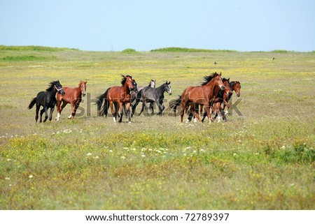 horse, a herd of horses, horse with foal - stock photo