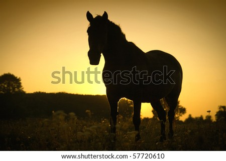 Horse against the gold sky - stock photo