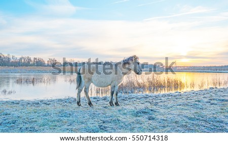 Horse along the shore of a frozen lake at sunrise in winter