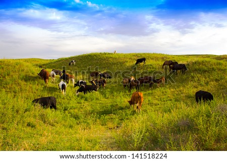 horse and cow pasture walks - stock photo