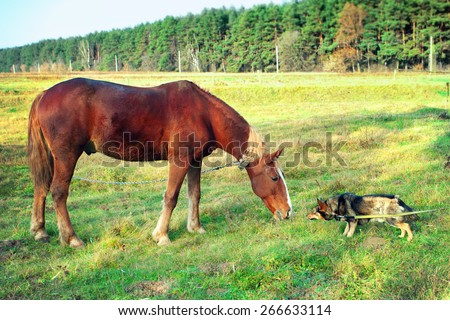 Horse and dog sniff to each other - stock photo