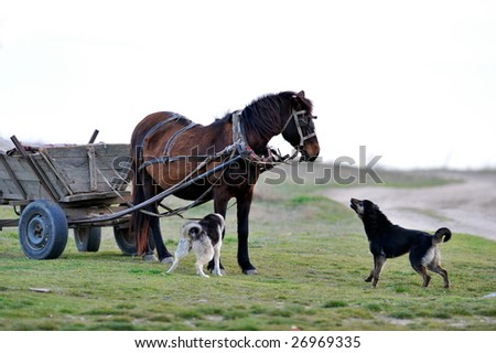 horse and dogs barking on field - stock photo
