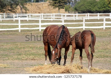 horse and foal in corral farm scene - stock photo