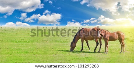 horse and foal on green meadow under cloud sky - stock photo