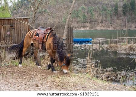 horse and lake - stock photo