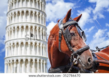 Horse and leaning tower of Pisa .Tuscany,Italy - stock photo