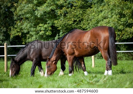 Horse and pony grazing in a summer meadow uk