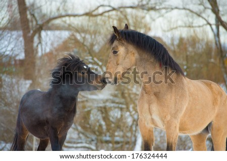 Horse and pony in love, portrait - stock photo