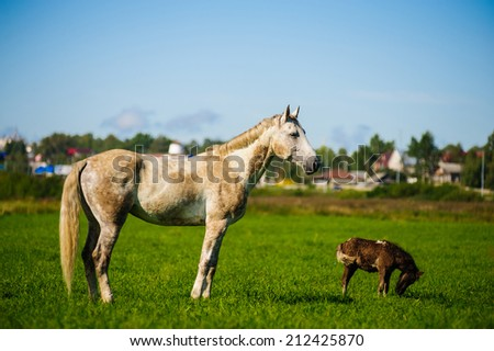 horse and pony on a green meadow - stock photo