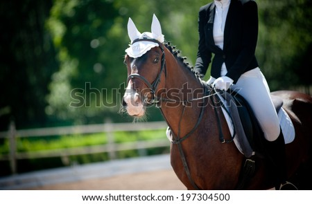 horse and rider on dressage championship - stock photo