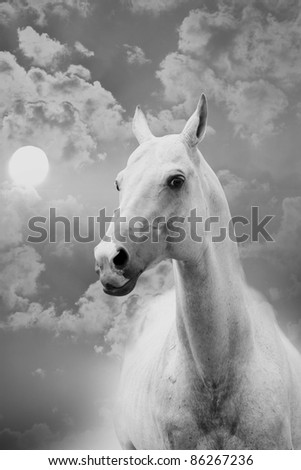 horse and sky - stock photo