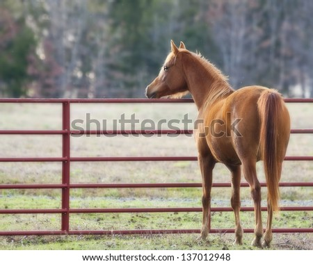 Horse at Gate - stock photo