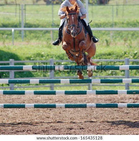 horse at jumping competition - stock photo