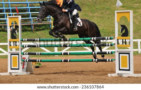 horse at jumping competition. outdoor - stock photo