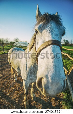 Horse at ranch. Funny horse portrait. Wide angle portrait.  - stock photo