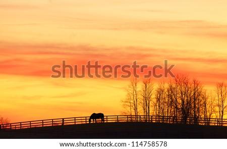 Horse at sunset - stock photo