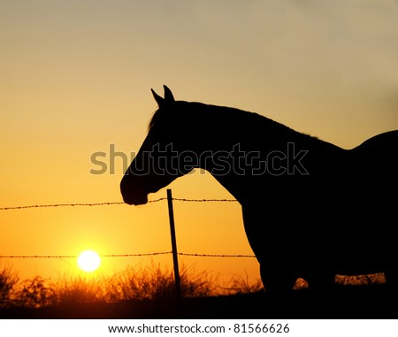 Horse at Sunset in the Pasture