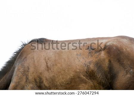 Horse back - stock photo