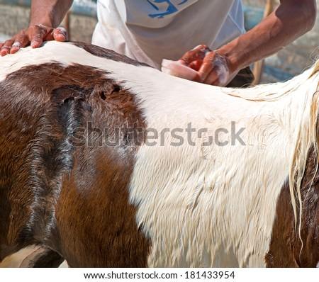 Horse back washing - stock photo