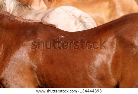 Horse backs in shades of chestnut, roan and dun