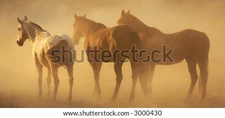 Horse Beauty - stock photo