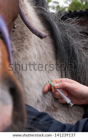 Horse being given an injection