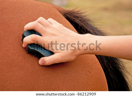 Horse being groomed with a rubber curry comb