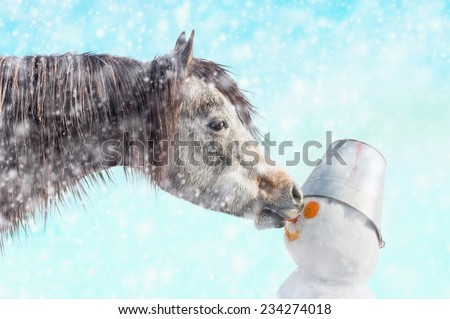 Horse bites off nose snowman, snow winter outdoor - stock photo
