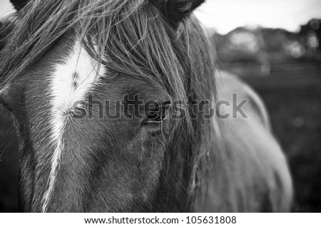 Horse Black & White - stock photo