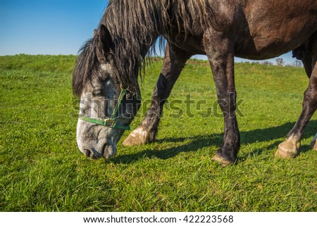 Horse brown color eating grass on the green field in the countryside