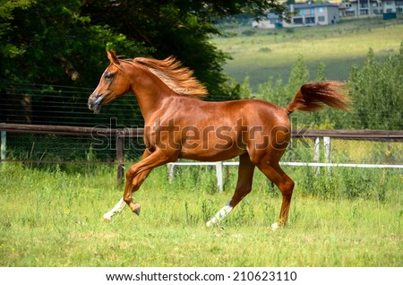 Horse cantering up the fields - stock photo