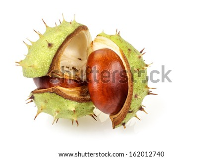 Horse chestnut (Aesculus hippocastanum) in natural shell  isolated on white