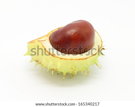Horse chestnut seed in peel on white background - closeup view