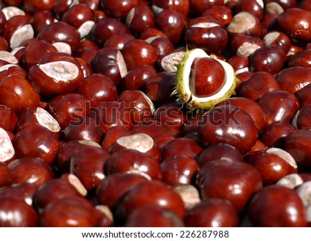 horse chestnuts - stock photo