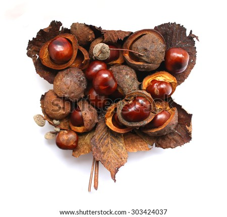 Horse-chestnuts (Aesculus hippocastanum) isolated on white background.