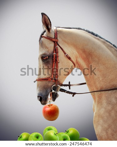 Horse chooses red apple - stock photo