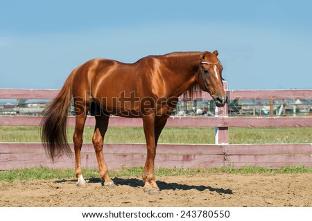 horse  close up at rural landscape  - stock photo