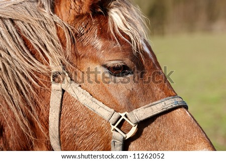Horse close-up  - very sharp and detailed - stock photo