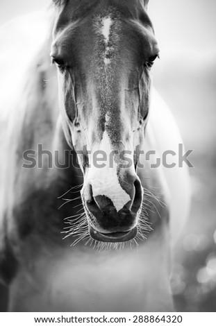 horse closeup - stock photo