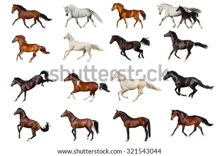 Horse collection  - stock photo