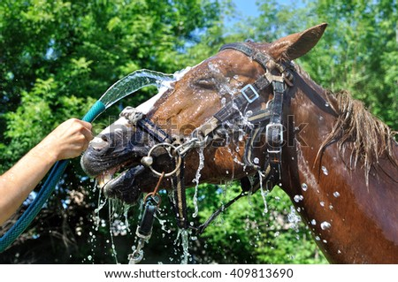 horse cooled by water in hot day