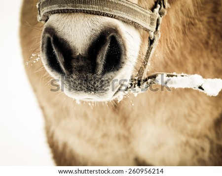 horse detail, nose nostrils and mouth front view - stock photo