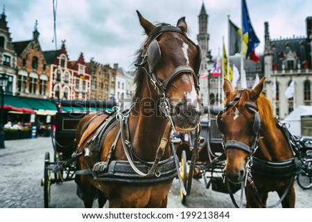 Horse-drawn carriages in Bruges, Belgium  - stock photo