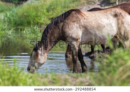 Horse drinking at water place. - stock photo
