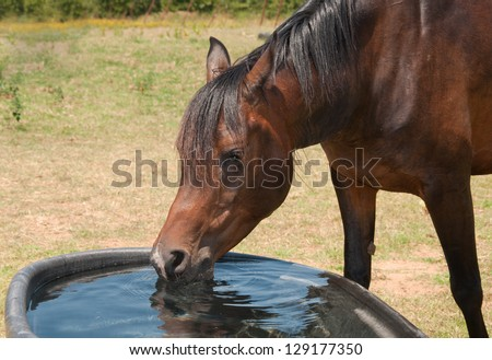 Horse drinking from a water trough on a hot summer day - stock photo